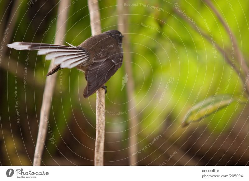 Nature Plant Animal Environment Landscape Bird Wild animal Sit Exceptional Elegant Esthetic Feather Bushes Uniqueness Branch Virgin forest