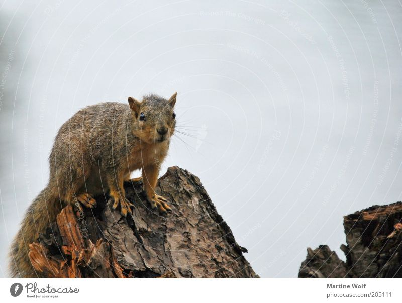 Nature Animal Wood Wild animal Curiosity USA Squirrel North America Americas Oregon