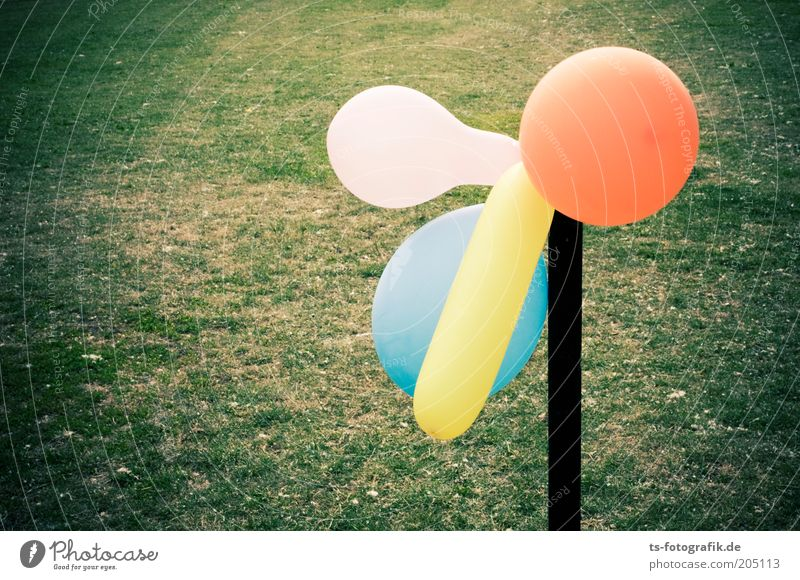 What are you looking at? Grass Balloon Rod Pole Round Blue Yellow Green Pink Orange Multicoloured Colour photo Exterior shot Detail Deserted Copy Space left