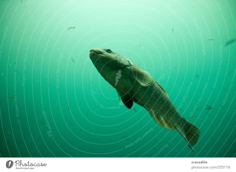 Nature Water Beautiful Animal Cold Movement Environment Fish Esthetic Cool (slang) Uniqueness Wild Exceptional Serene Wild animal