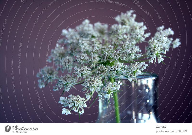 Nature White Plant Summer Blossom Spring Violet Decoration Vase Blur Flower vase Elderflower
