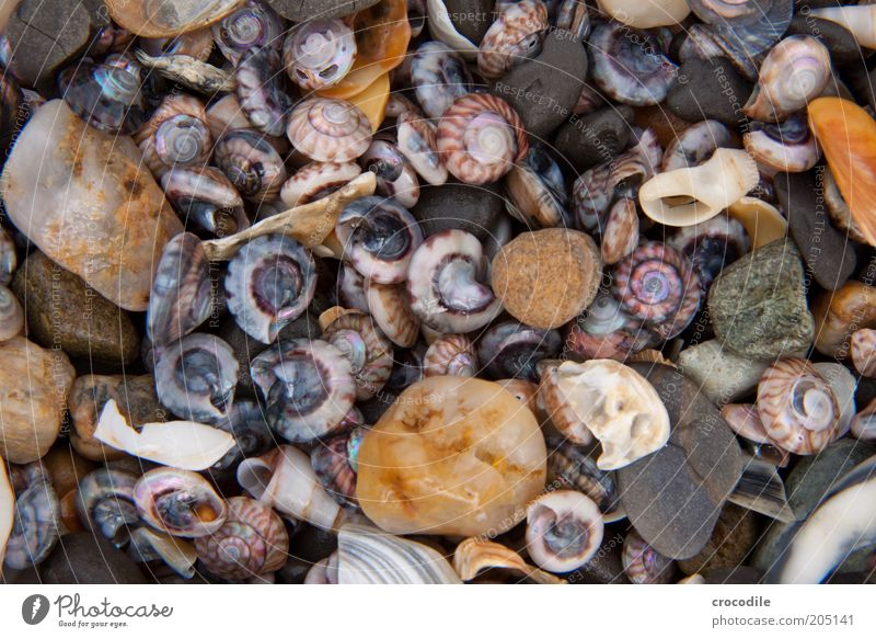 Beautiful Ocean Beach Stone Coast Environment Island Broken Uniqueness Wild animal Mussel Environmental pollution Macro (Extreme close-up) Souvenir New Zealand
