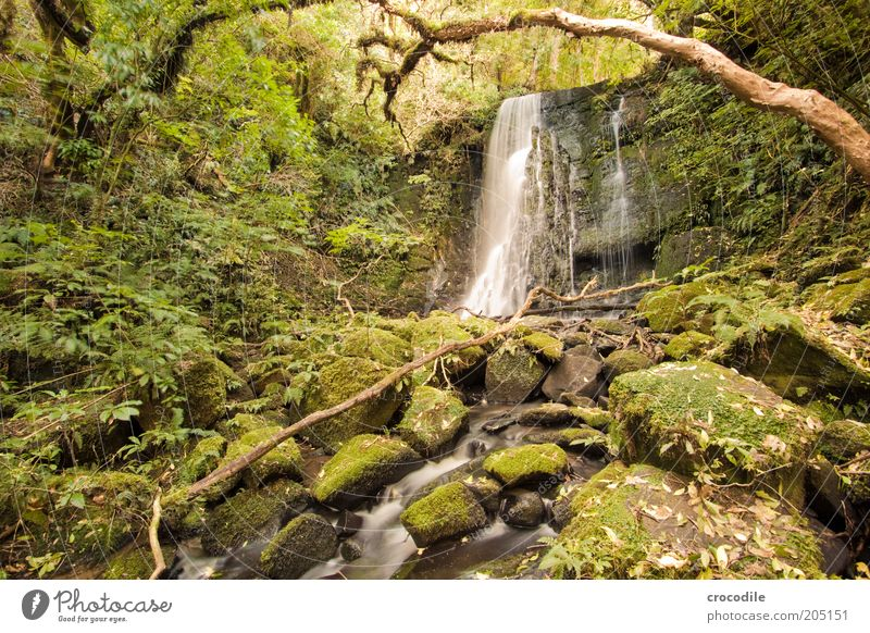 Nature Water Tree Plant Environment Esthetic River Romance Exceptional Virgin forest Moss Brook Waterfall Land Feature New Zealand Fern
