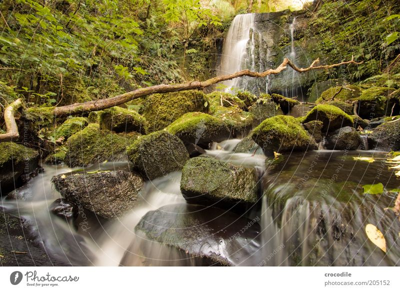 Nature Water Plant Environment Rock Esthetic River Romance Branch Exceptional Virgin forest Forest Moss Brook Body of water Waterfall