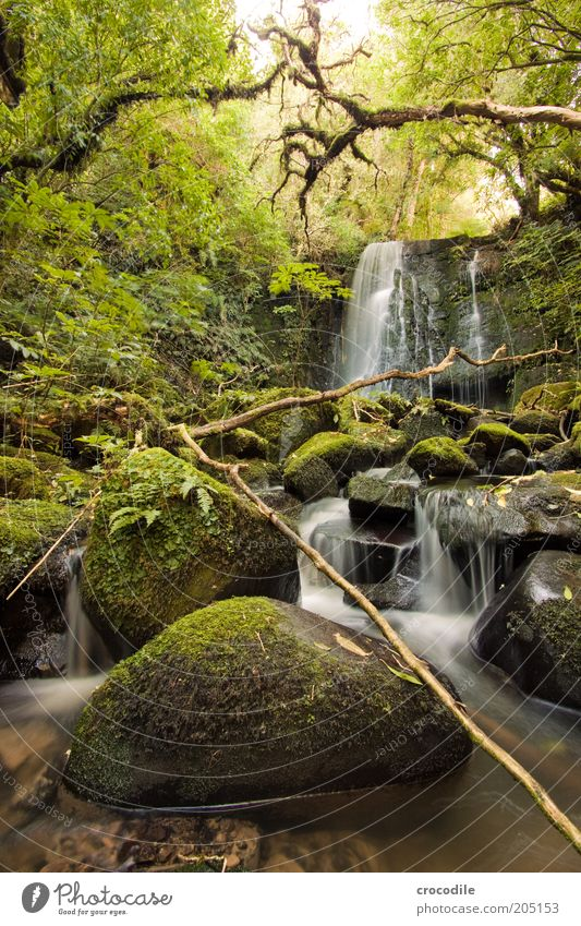 New Zealand 110 Environment Nature Water Plant Tree Moss Fern Pteridopsida Wild plant Virgin forest Brook River Waterfall Esthetic Exceptional Romance