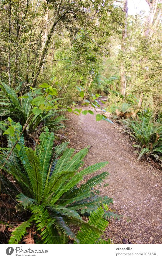 Nature Tree Plant Lanes & trails Environment Esthetic Exceptional Virgin forest Fern New Zealand Nature reserve Pteridopsida Wild plant