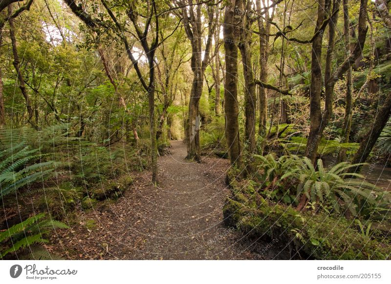 Nature Tree Plant Lanes & trails Environment Esthetic Hope Exceptional Virgin forest Moss Forest Fern New Zealand Nature reserve Pteridopsida Spring fever