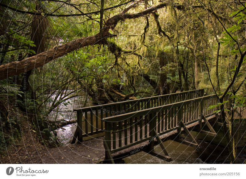 Nature Water Tree Plant Lanes & trails Environment Bridge Esthetic River Romance Exceptional Virgin forest Footpath Moss Brook Fern
