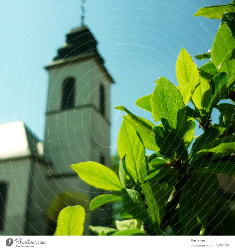 Sky Plant Summer Leaf Calm Spring Environment Architecture Religion and faith Church Bushes Manmade structures Baroque Make green Leaf green Church spire