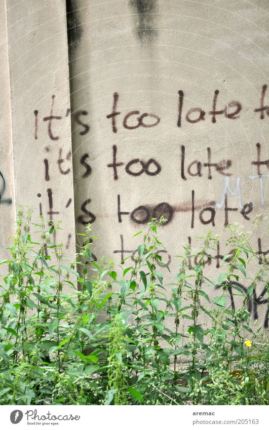 Plant Wall (building) Wall (barrier) Moody Concrete Time Characters Sign Distress Late Frustration Hopelessness Disappointment Foliage plant Resign