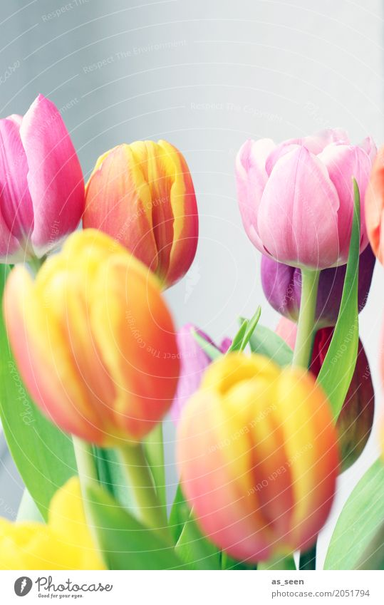 bouquet Lifestyle Wellness Harmonious Senses Relaxation Decoration Easter Birthday Environment Nature Spring Summer Plant Flower Tulip Bouquet Blossoming