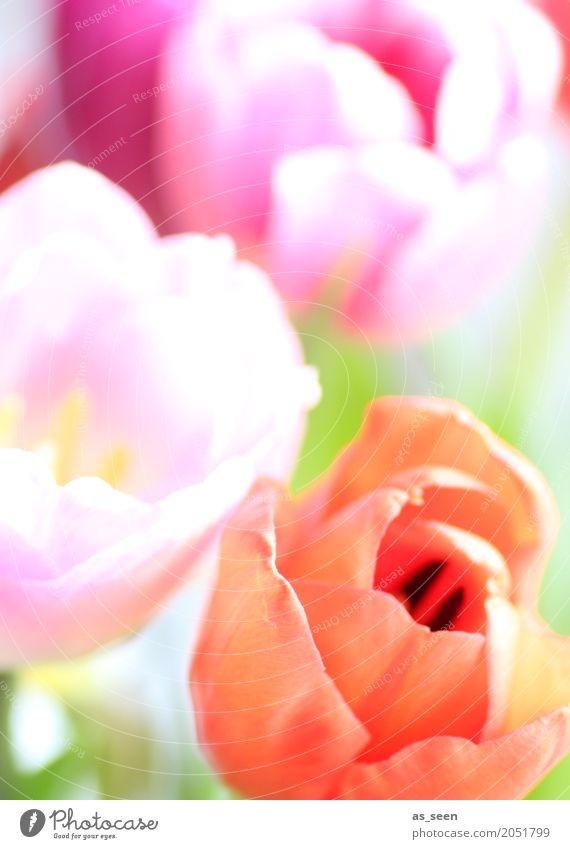 Nature Plant Summer Colour Green Flower Life Lifestyle Blossom Spring Movement Garden Orange Design Pink Bright
