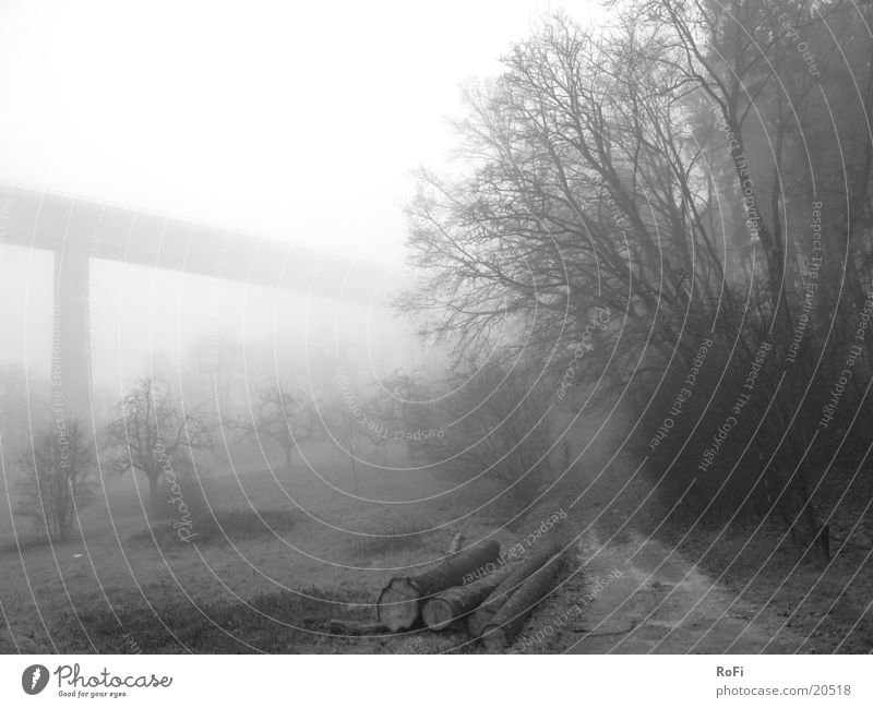 Autumn morning in grey Fog Gray Morning fog Tree Bushes Footpath Mountain Black & white photo Bridge viaduct