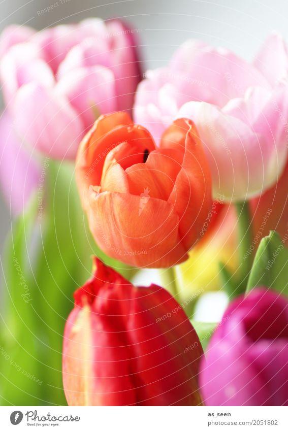 Nature Summer Colour Flower Leaf Life Lifestyle Blossom Spring Style Garden Feasts & Celebrations Design Orange Pink Growth