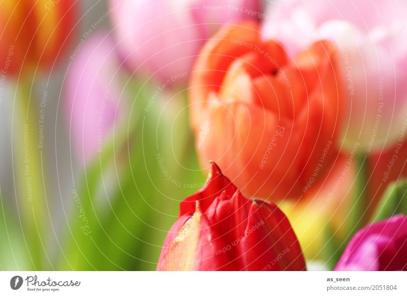 Nature Plant Summer Colour Green Flower Red Leaf Joy Life Lifestyle Blossom Spring Design Orange Pink