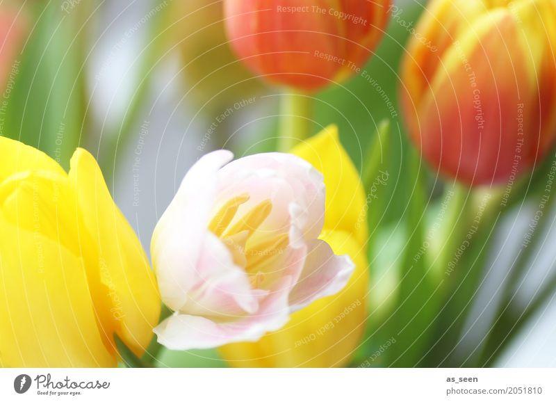 Nature Summer Colour Green Flower Leaf Life Yellow Lifestyle Blossom Spring Emotions Garden Feasts & Celebrations Design Orange