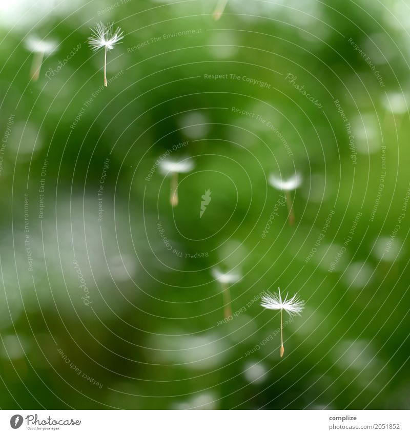 flight school Healthy Wellness Well-being Senses Relaxation Calm Meditation Cure Spa Serene Contentment Breath Dandelion Nature Background picture Flying Seed