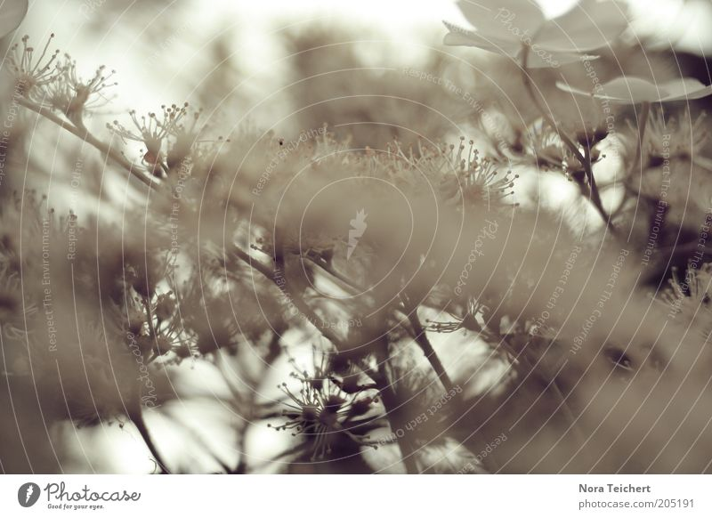 Nature Beautiful Sky White Tree Plant Summer Blossom Spring Moody Environment Esthetic Growth Bushes Blossoming Shallow depth of field