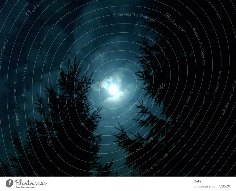 Sky Tree Blue Clouds Autumn Moon Mystic Eerie Moonlight