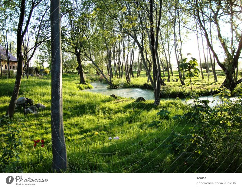 Oasis on Rügen Environment Nature Plant Sky Sunlight Summer Beautiful weather Tree Grass Bushes Bog Marsh Brook Stone Exceptional Brown Yellow Green Idyll