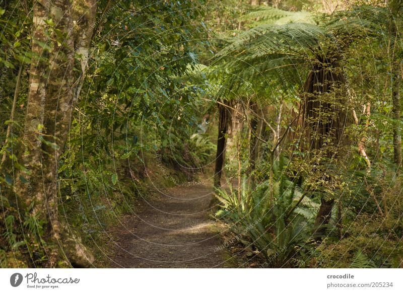Nature Water Tree Plant Lanes & trails Environment Esthetic Exceptional Virgin forest Fern New Zealand Pteridopsida Forest Wild plant