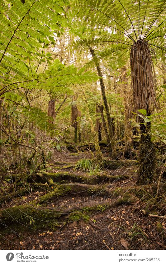 Nature Water Tree Plant Lanes & trails Environment Esthetic Romance Exceptional Virgin forest Moss Fern New Zealand Pteridopsida Perspective Wide angle