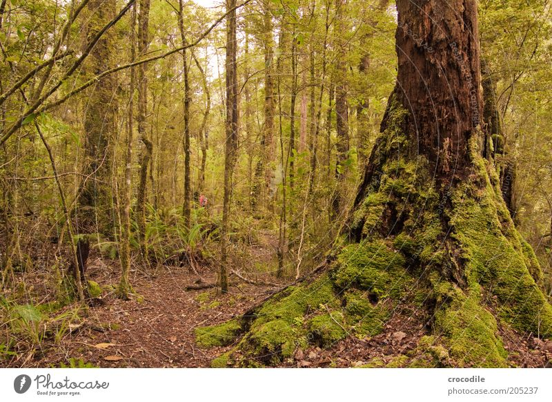 Nature Water Tree Plant Lanes & trails Environment Esthetic Romance Exceptional Virgin forest Moss New Zealand Wild plant