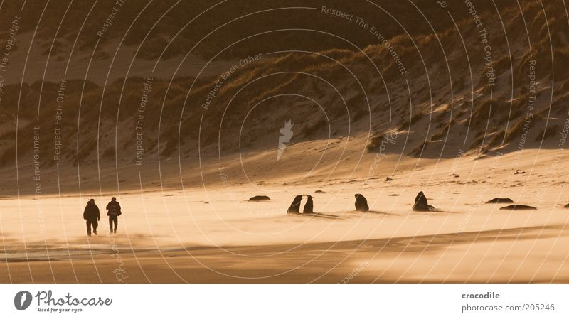 Human being Nature Ocean Beach Animal Sand Landscape Coast Wind Environment Trip Lifestyle Adventure Island Threat Exceptional