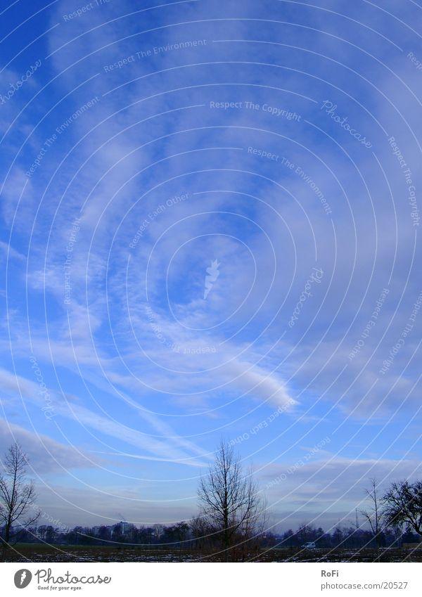 Sky Tree Blue Winter Clouds Beautiful weather Twig February