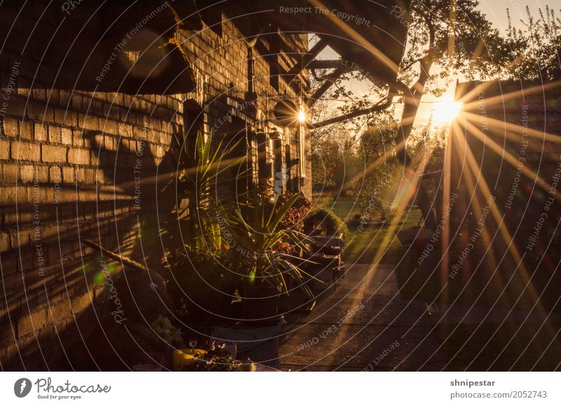 Sunset in the Spreewald Wellness Well-being Relaxation Calm Cure Vacation & Travel Tourism Trip Freedom Summer vacation Environment Nature Landscape Plant