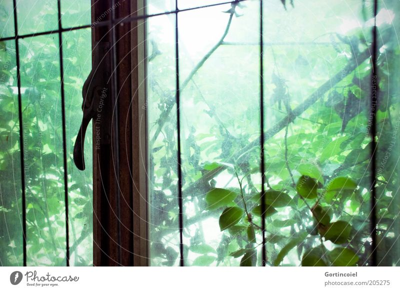Nature Old Tree Green Plant Leaf Window Environment Growth Bushes Derelict Decline Grating Branchage Foliage plant Make green
