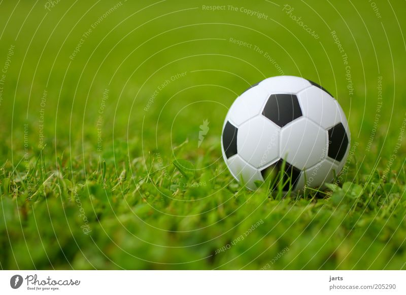 soccer Leisure and hobbies Sports Ball Colour photo Exterior shot Close-up Deserted Day Deep depth of field Worm's-eye view Grass surface Foot ball 1 Sphere