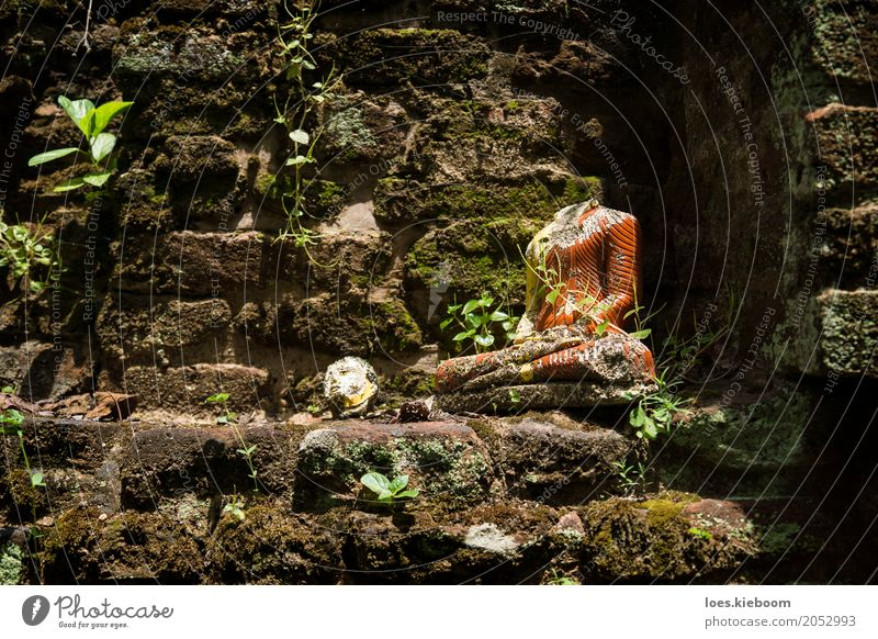 Beheaded Buddha Vacation & Travel Peace Religion and faith Sri Lanka Asia Iceland buddhism Anuradhapura Nakha Vihara hidden temple jungle bricks leaves Moss