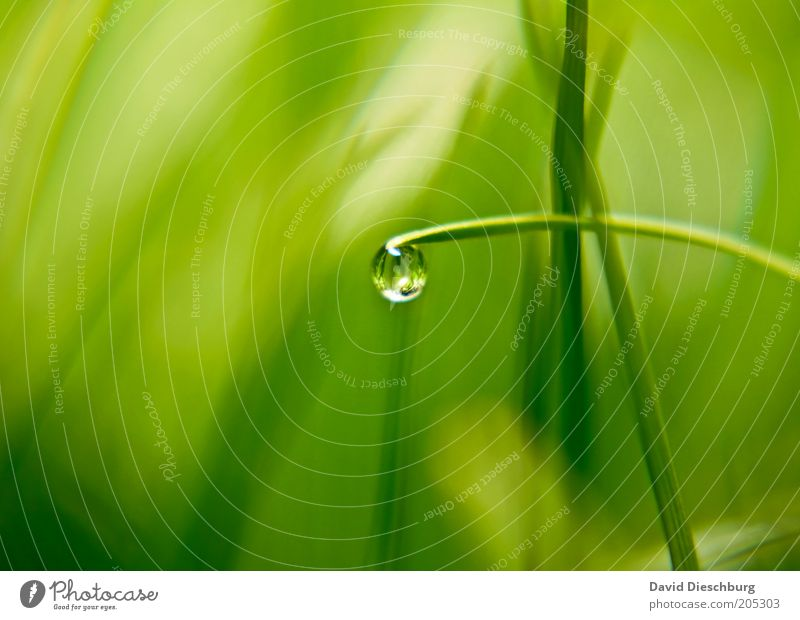 Nature Plant Green Summer Life Spring Grass Glittering Fresh Drops of water Individual Wet Harmonious Sphere Blade of grass