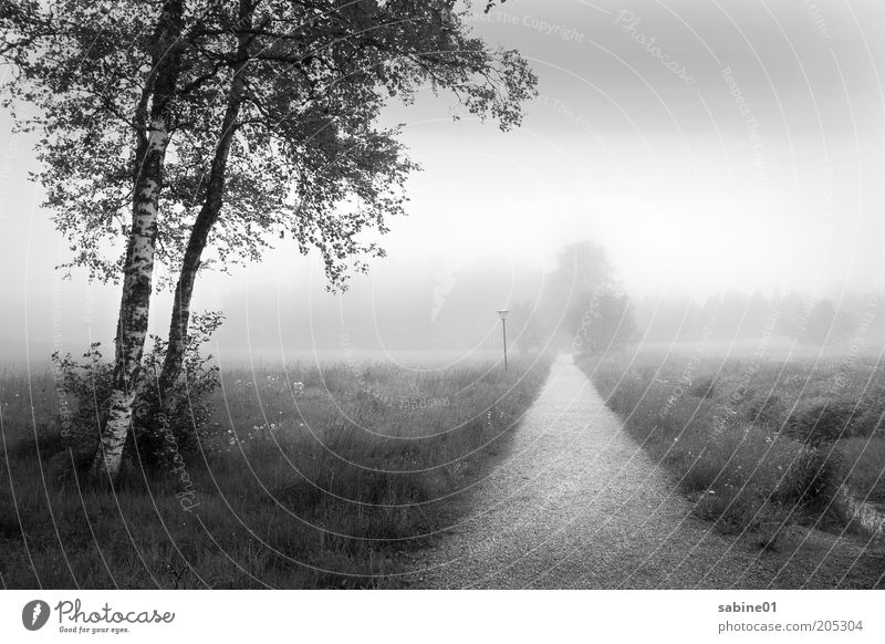 Nature White Tree Plant Summer Black Clouds Autumn Meadow Grass Lanes & trails Park Rain Landscape Air Moody
