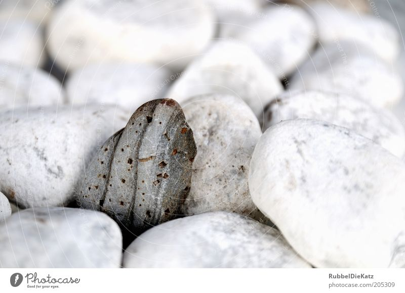 Einstein Nature Stone Pebble Colour photo Exterior shot Close-up Detail Macro (Extreme close-up) Deserted Copy Space top Shallow depth of field Stony