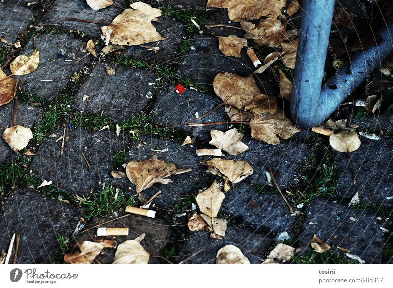 red dot Autumn Leaf Paving stone Cigarette Trash Ground Stone Tobacco products Down-to-earth Colour photo Exterior shot Detail Deserted Day Seam Autumn leaves