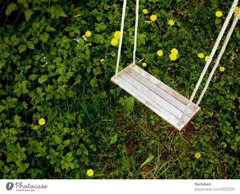I'm dangling between dandelions. Summer Nature Plant Grass Blossom Dandelion Playground Natural Calm Stagnating Swing Colour photo Multicoloured Exterior shot
