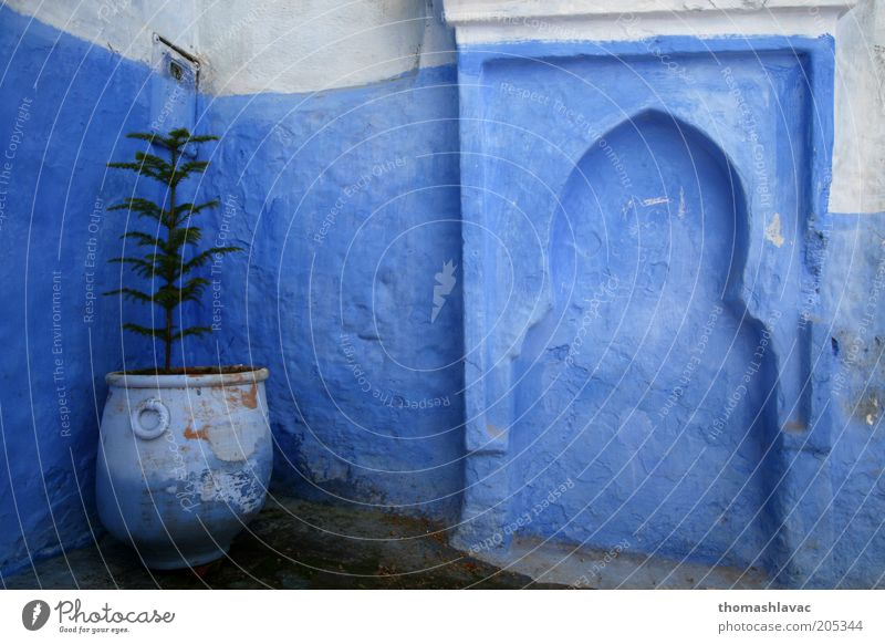 Blue house Tree Plant House (Residential Structure) Wall (building) Wall (barrier) Facade Africa Village Flowerpot Old town Foliage plant Town Morocco