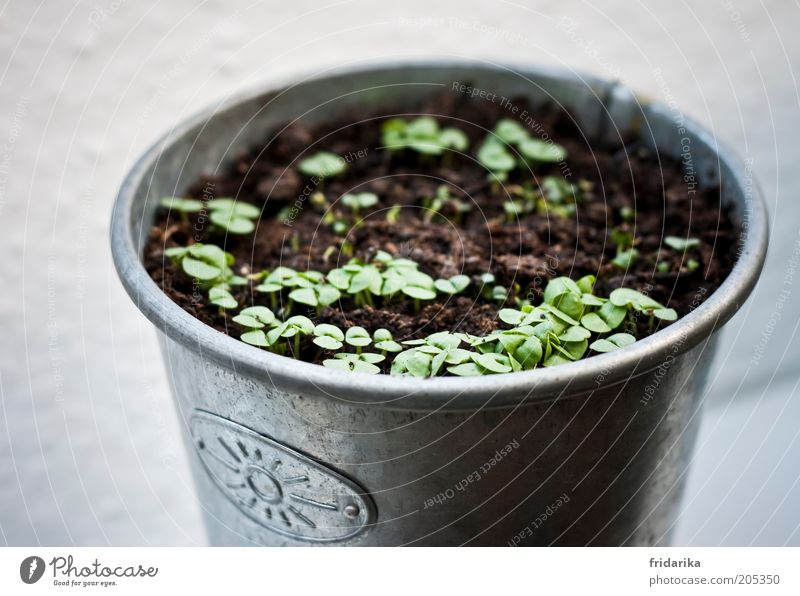 Nature Green Plant Leaf Calm Gray Small Brown Earth Growth Herbs and spices Organic produce Silver Anticipation Flowerpot Patient