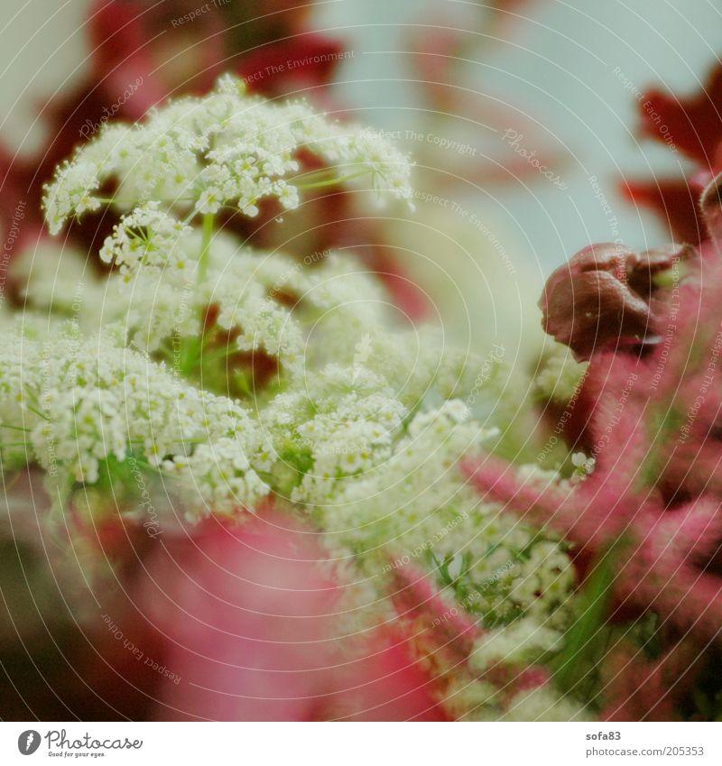 Beautiful White Flower Plant Blossom Spring Esthetic Near Fragrance Macro (Extreme close-up) Wild plant