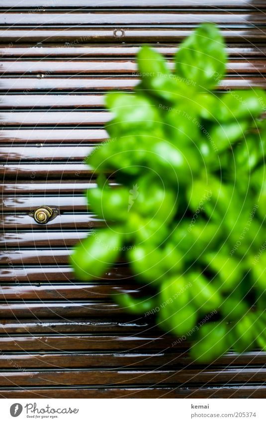 Nature Green Plant Leaf Animal Spring Brown Environment Climate Wild animal Terrace Snail Wooden floor Foliage plant Herbs and spices Snail shell