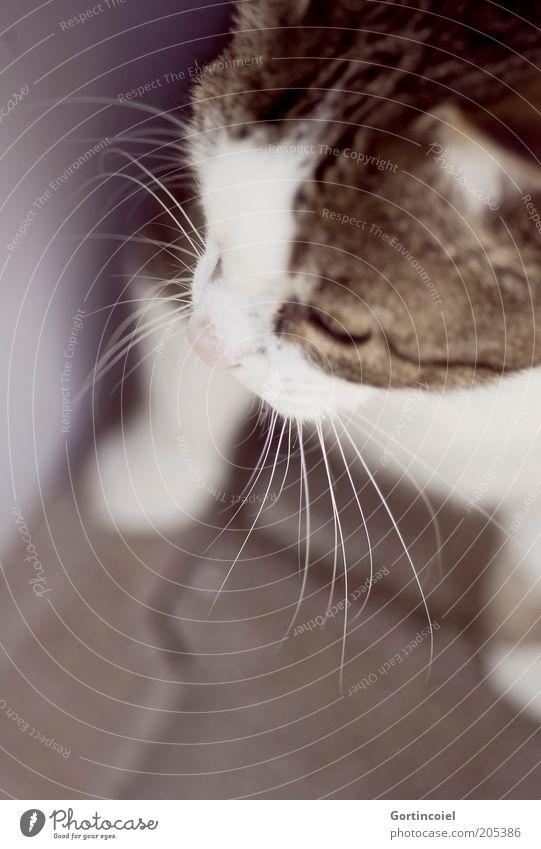 Calm Animal Cat Animal face Observe Trust Pelt Watchfulness Noble Paw Pet Graceful Domestic cat Whisker Purr Cat's head