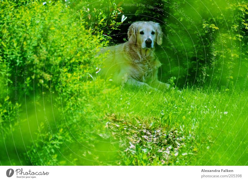 Nature Green Plant Summer Animal Spring Garden Dog Environment Sit Lawn Bushes Animal face Lie Observe