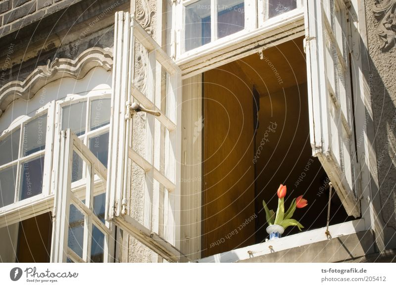 Flower House (Residential Structure) Window Building Architecture Esthetic Tulip Old building Multicoloured Window frame Ventilate Windowsill Window seat
