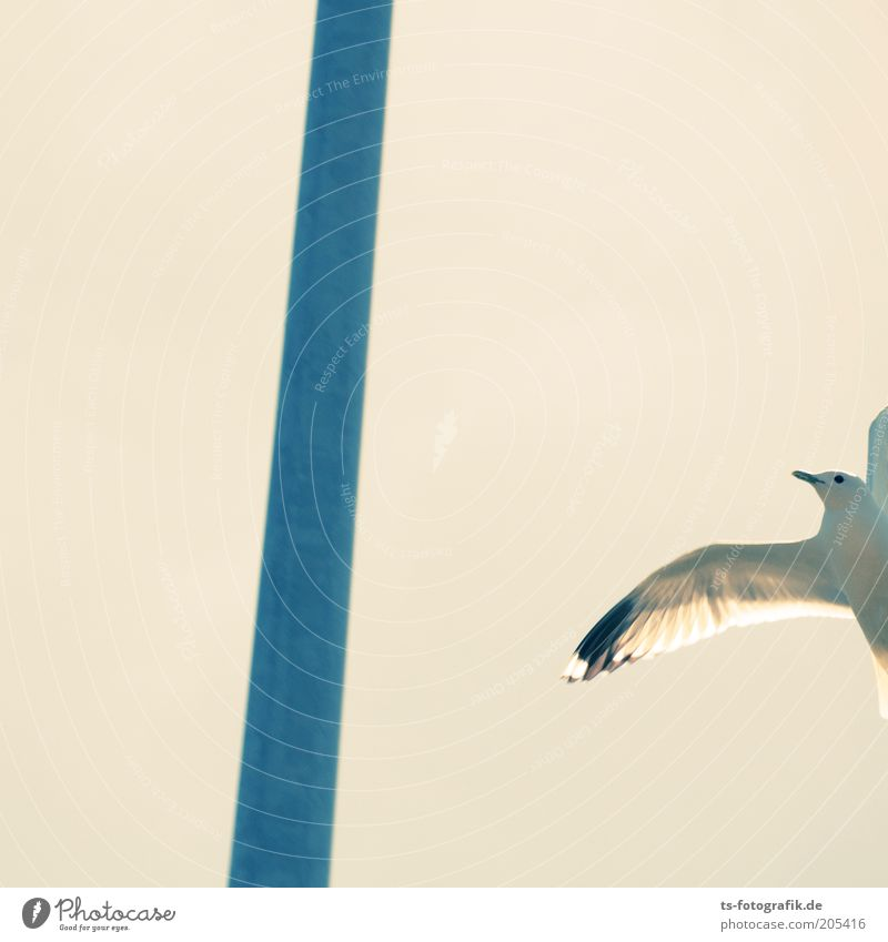 Forgot your glasses? Nature Animal Air Lamp post Pole Bird Wing Seagull Gull birds 1 Metal Flying Free Bright Blue White Freedom Colour photo Exterior shot