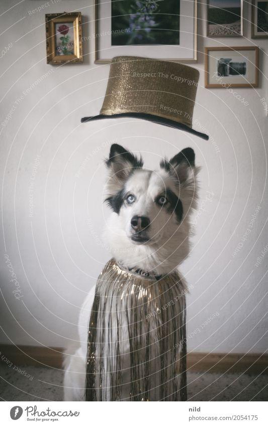 Dog Beautiful White Animal Black Funny Exceptional Fashion Glittering Elegant Crazy Clothing Cute Friendliness Hip & trendy Pet