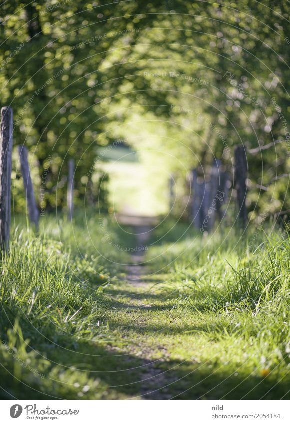 summer trail Environment Nature Landscape Summer Beautiful weather Plant Tree Meadow Field Lanes & trails Discover Relaxation Hiking Green Calm Colour photo