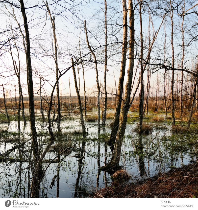 Nature Old Water Tree Plant Environment Life Landscape Earth Wet Natural Climate Elements Beautiful weather Past Damp