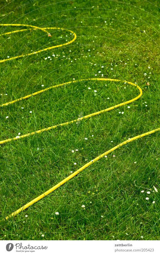Water Summer Yellow Meadow Grass Garden Fresh Lawn Leisure and hobbies Grass surface Curve Refreshment Cast Hose Work and employment Gardening